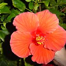 Pretty Flower ( by gypsykatz