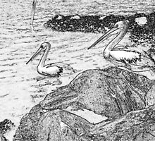 Pelicans Converted to Pencil Drawing by odarkeone