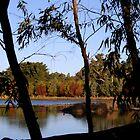 Wetlands by gypsygirl
