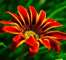 Colourful flower by ndarby1
