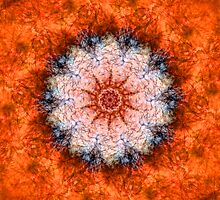 Orange Trip by Ross Jardine