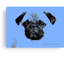 mops puppy pup baby blue Canvas Print