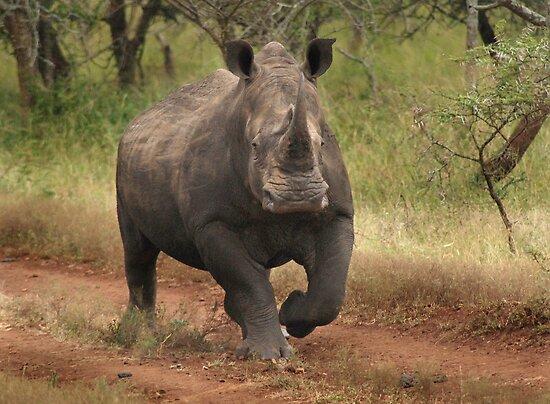 White Rhino by Sharon Bishop