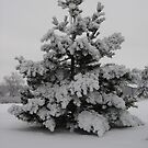 Pine Tree Full of Snow by KatsEye