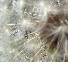Fluff by Diana Symes