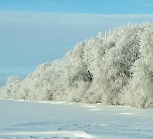 Hoarfrost Trees by Crystal Zacharias