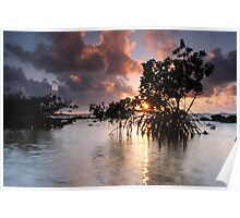 Mangroves at Dawn Poster