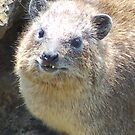 Hello Little Hyrax by ApeArt