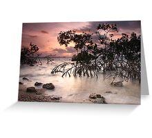 Mangroves at Dawn Greeting Card