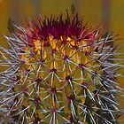 Cactus Purple by agtaylor