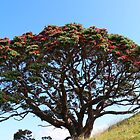 Pōhutukawa Tree by KarliBelinda