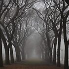 Columns of Trees in the Fog by gottschalkphoto