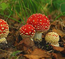 A fly-agaric family by jchanders
