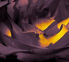 patch of light by Jessica Karran