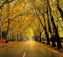 autumn avenue by fuxart