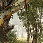 """Raining On The Gum' by Jayne Healy"