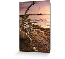 Sargasso Weed and Buttonwood at Sunrise with Sailboat behind Greeting Card
