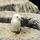 Yellow Biled Gull by Moxy