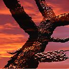 Cholla Sunset by Trace Lowe