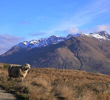 New Zealand by miclile