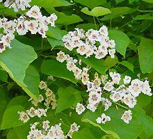 Catalpa Blossom by SusannahFry