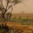 Mallee Dust - Red Cliffs, Vic by Angela Stewart