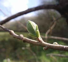 The Leaf Bud by James Stevens
