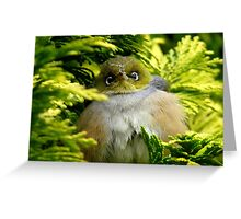 I'm Camouflaged In A Web!  - Silvereye - Wax Eye - New Zealand Greeting Card