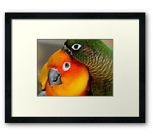 Hang On... Yip... I Got That Nasty Little Pin... - Conures - NZ Framed Print