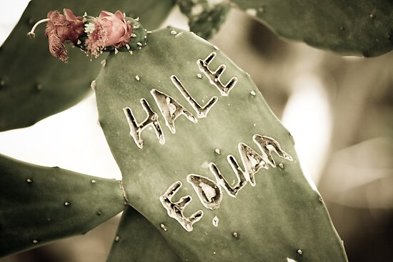 Hale Eduan by Colin Tobin