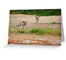 Wallaby Flees Dingo. Greeting Card
