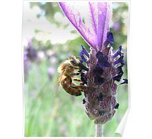 Bumbling Bee Poster