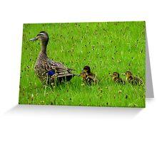 Come on Kids Move Along! - Mallard Ducks - NZ Greeting Card