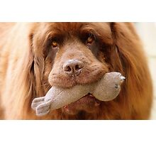 Pleeeese! come play with us - Big Doggy - NZ Photographic Print
