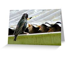 Don't Talk With Your Mouth Full! - Starlings Chicks - NZ Greeting Card