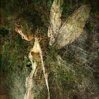 Titania by Thomas Dodd