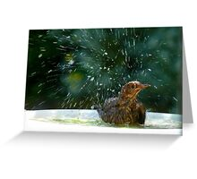 I Like To Stay In Tip-Top Condition - Blackbird Bathing - NZ Greeting Card