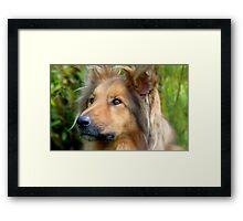 Lassie Come Home! - Cross Collie Dog - NZ Framed Print
