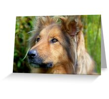 Lassie Come Home! - Cross Collie Dog - NZ Greeting Card