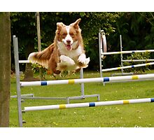 I Believe I Can Fly... I Believe... - Border Collie - NZ Photographic Print