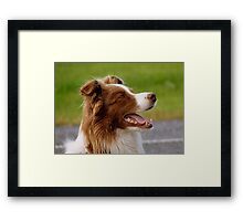 I'm Ready For Duty Master! - Beautiful dog - Southland Framed Print