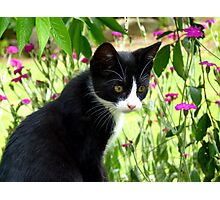 Wow, That is Amazing The Plants Move! Kitten - NZ Photographic Print