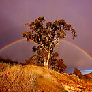 Rainbow by Michael Walters