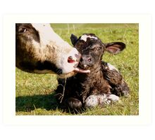 Welcome To The World My Son!! New Born Calf - NZ Art Print