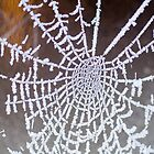 frosted cobweb by Ken McKillop