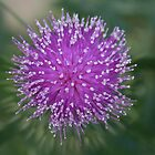Scottish Thistle by Jacqueline Marchant