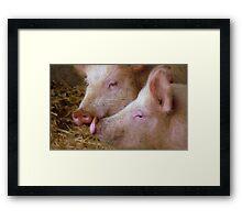 Hey Babe! Pigs - Mosburn Southland NZ Framed Print