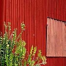 Fred's Red Shed by Frank  McDonald