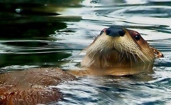 Otter by Kenart