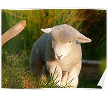 I'm The King Of The Castle.... Lamb - NZ Poster
